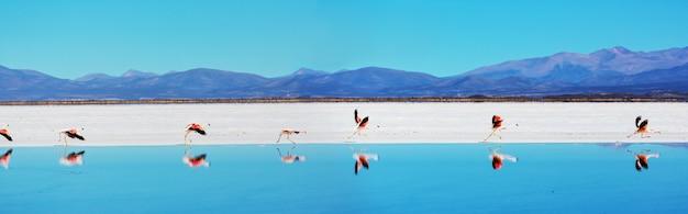 Flamingo tijdens de vlucht in de bergen