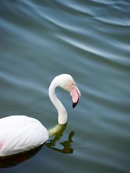 Flamingo vogel dierentuin waterspiegel dierentuin