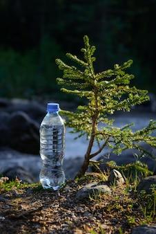 Fles helder ijskoud water uit bergbeek in de buurt van een kleine naaldboom in de zonnestralen
