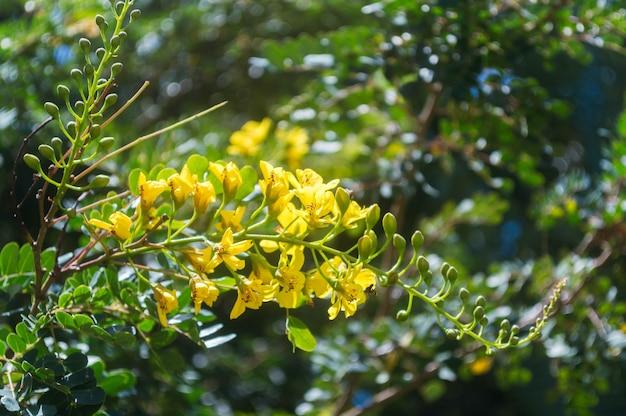 Flor kleur amarillo