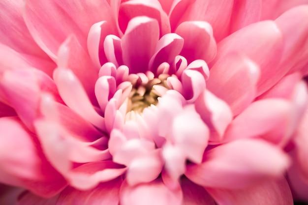 Flora branding en liefde concept koraal madeliefje bloemblaadjes in bloei abstracte bloemen bloesem kunst terug...
