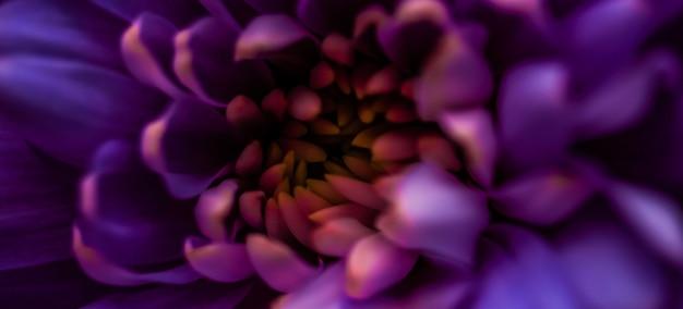 Flora branding en liefde concept paarse madeliefje bloemblaadjes in bloei abstracte bloemen bloesem kunst bac...