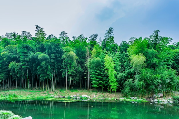 Flora cultuur groei boom decoratie