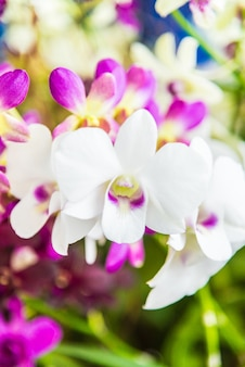 Flora natuurlijke natuur geel violet