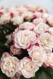 Floral achtergrond. lichtgele rozen met roze bloemblaadjes