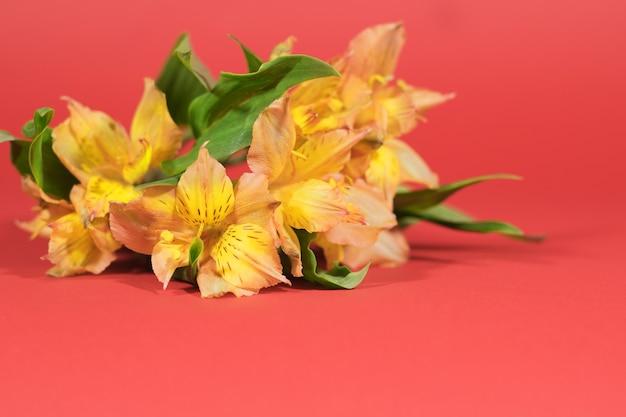 Floral achtergrond. selectieve aandacht. alstroemeria boeket op een rode achtergrond met bokeh. wenskaart.