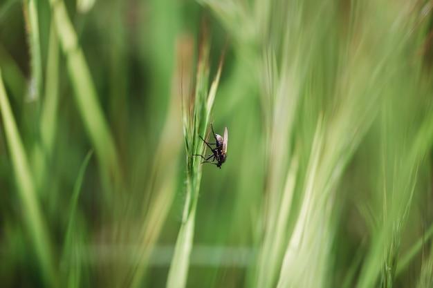 Floral zomer lente achtergrond. gras close-up in een veld op de natuur. kleurrijk artistiek beeld, vrije exemplaarruimte