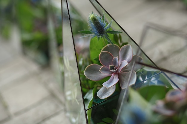 Florarium met verse succulente bloemen.