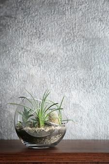 Florarium met vetplanten en cactus op grijze muur met kopie ruimte