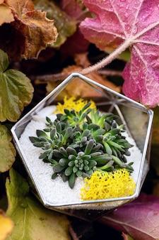 Florarium onder de herfstbladeren in de tuin