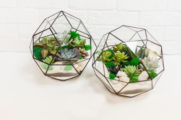 Florarium - samenstelling van vetplanten, steen, zand en glas, element van interieur, home decor, glazen terarium
