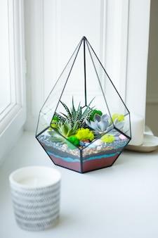 Florarium - samenstelling van vetplanten, steen, zand en glas
