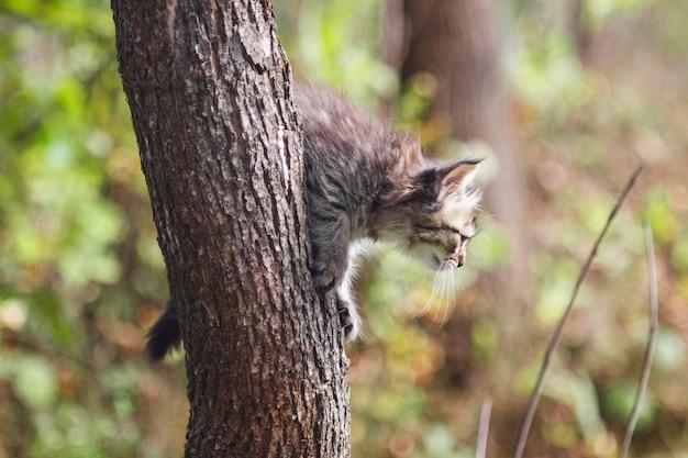 Fluffy kitten alleen in de holte van een boom in de zomer