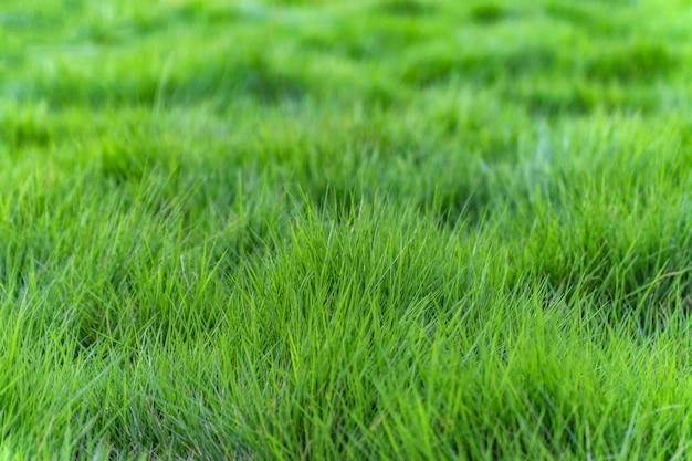 Focus effect weelderige natuurlijke groei