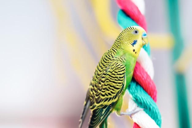 Focus op papegaai zittend op touw