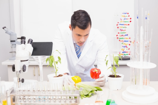 Focus wetenschapper onderzoekt paprika's