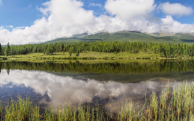 Forest lake op een rustige zomerochtend