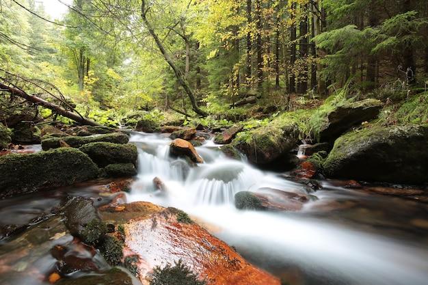 Forest stream stroomt uit de bergen