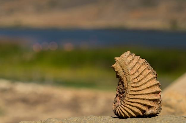 Fossielen versteenden in de loop van de tijd