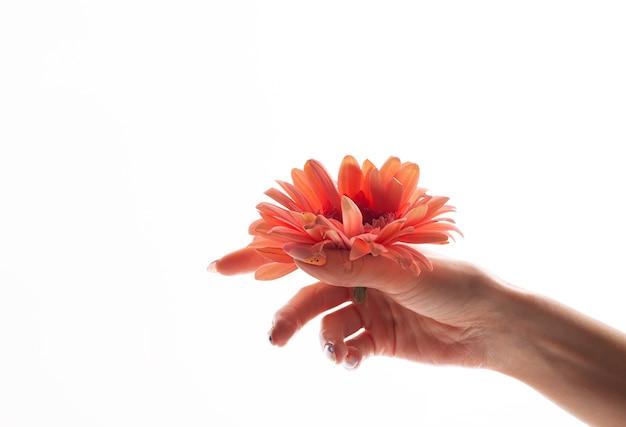 Foto die van de hand van pure vrouwen roze bloem houdt die op wit wordt geïsoleerd