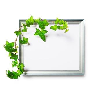 Foto fotolijst met groene klimop bladeren geïsoleerd op een witte achtergrond uitknippad inbegrepen