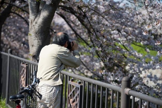 Foto kersenbloesem aan de gojo-rivier, nagoya