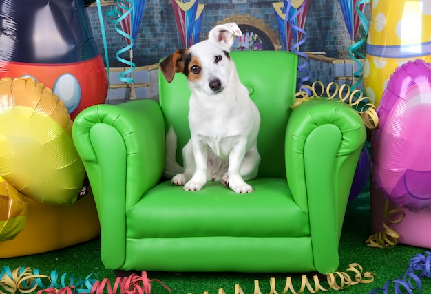 Foto's van carnaval met een jack russell op een groene fauteuil