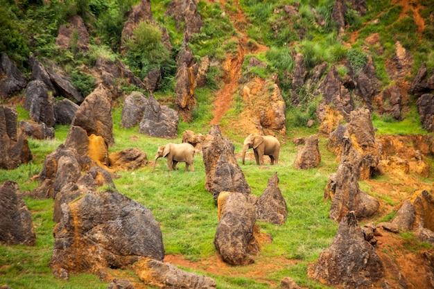 Foto van afrikaanse olifanten. loxodonta africana in het natuurpark cabarceno in cantabrië
