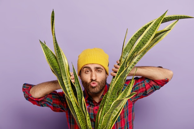Foto van amateur-tuinman kijkt door bladeren van slangenplant, houdt lippen gevouwen, wil iemand kussen, zorgt voor kamerplant, draagt gele hoed en casual shirt. plant zorg en natuur concept
