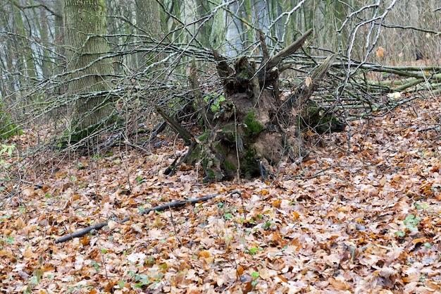 Foto van bomen in het herfstseizoen tijdens de herfst van de herfst.