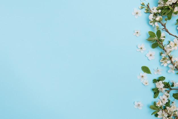 Foto van de bloesem boom van de de lente witte kersen op blauwe oppervlakte