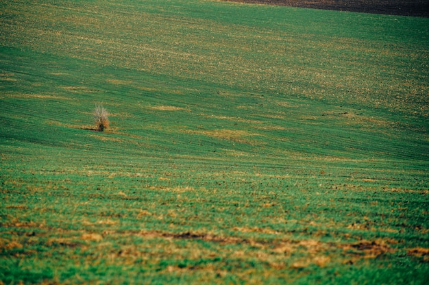 Foto van een landbouwgebied, mooi groen landbouwlandschap