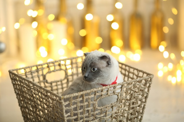 Foto van een nieuwjaarsgeschenk van een zacht pluizig kittenhuisdier.