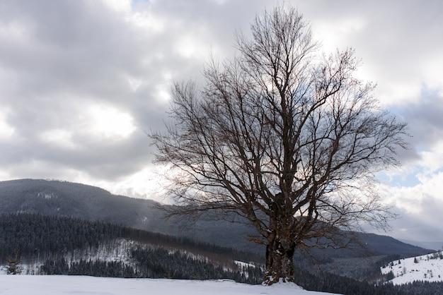 Foto van een oude beuk op een achtergrond van bergen.