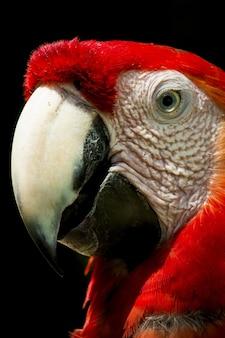 Foto van een papegaai die poseert bij