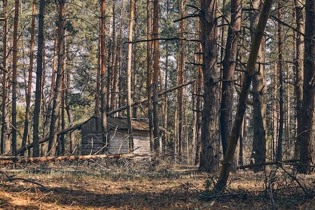 Foto van een vervallen klein houten jachthuis dat achter de naaldbomen vandaan gluurt