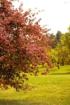 Foto van een zonnige dag, in het voorjaar park met bloesem bomen