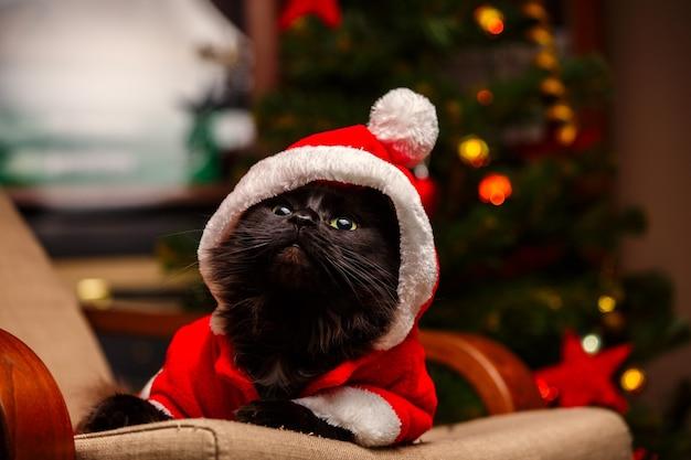 Foto van feestelijke kat in santa kostuum zittend aan een stoel met kerstboom met brandende slinger