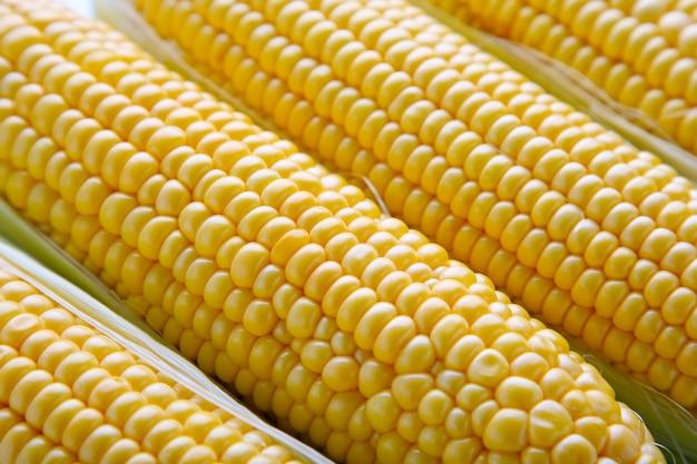 Foto van gele graanachtergrond. verse maïs.