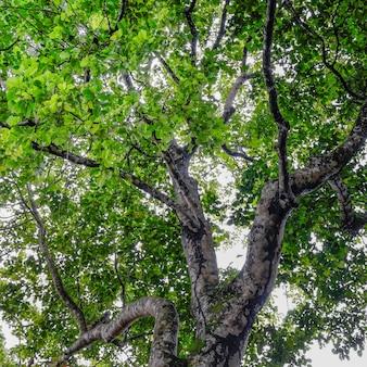 Foto van groene bladeren en bomen met een zeer natuurlijke beoordeling in de wilde bossen van azië