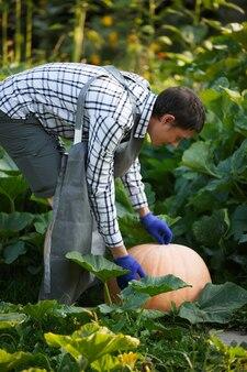 Foto van kant van man in blauwe handschoenen met pompoen