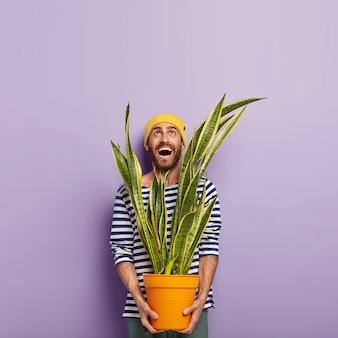 Foto van lachende blije man naar boven gericht, houdt pot met sansevieria, gekleed in gestreepte trui, heeft positieve uitdrukking, geïsoleerd op paarse achtergrond.