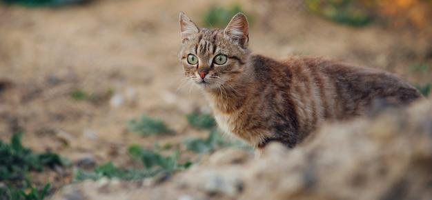 Foto van mooie schattige kat in de tuin, mooie pot spelen buiten bij zonsondergang.