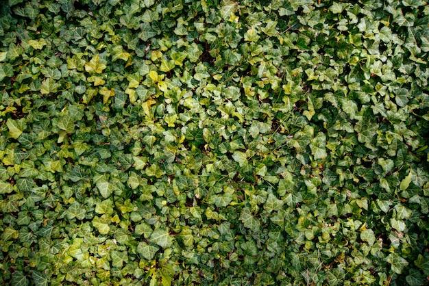 Foto van o groene borstel, kleine bladeren, verse plant