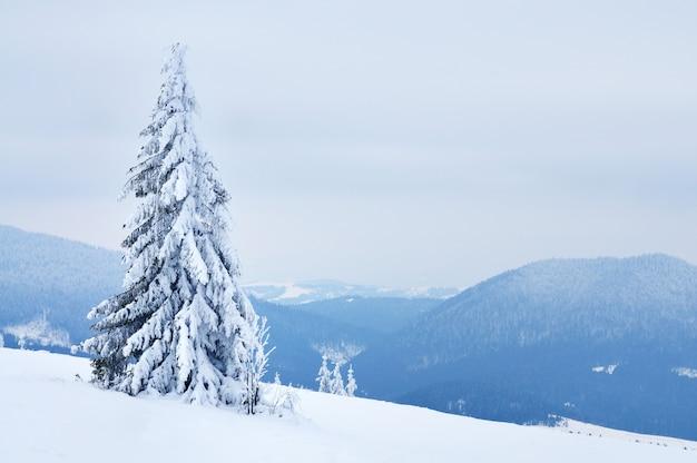 Foto van pijnbomen bedekt met sneeuw