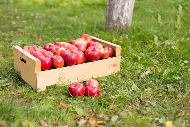 Foto van vers geplukte rode appels in een houten krat op gras in zonneschijnlicht.