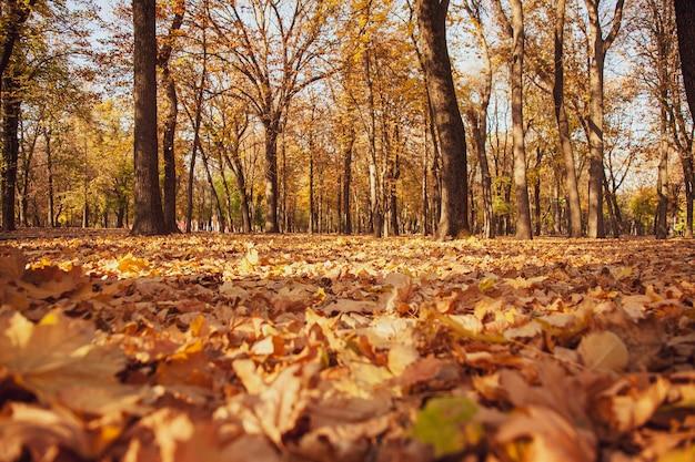 Foto vanaf de grond van een herfstpark met gevallen bladeren en een zonnig zonsonderganglicht