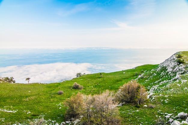 Foto vanaf de top van de ai-petri-berg, boom groeit op rots, prachtige horizon en blauwe lucht met witte wolken