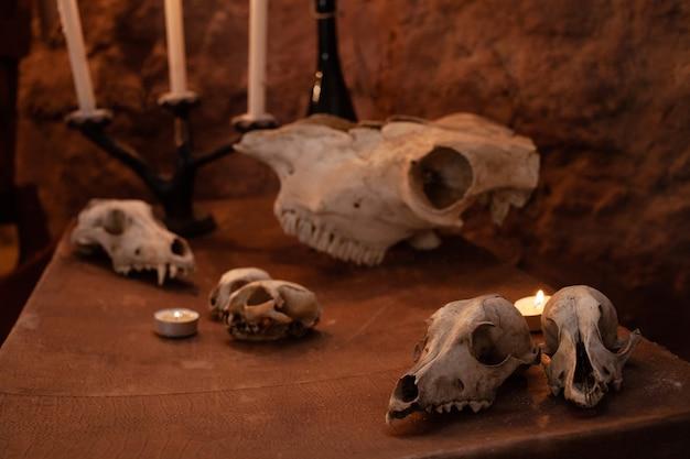 Fotozone in de studio voor halloween. dramatisch, intimiderend landschap voor allerheiligen