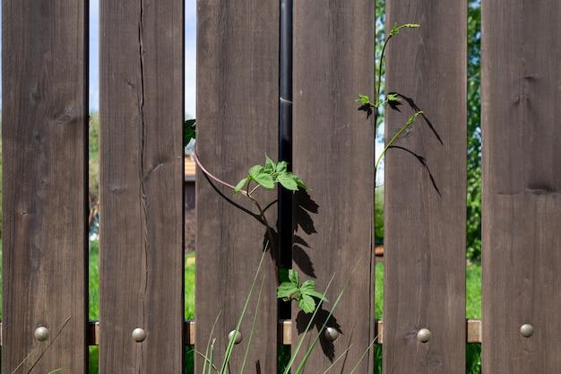Fragment van een houten plankomheining met metalen klinknagels en een klimplant. veiligheidsconcept. achtergrond met kopieerruimte